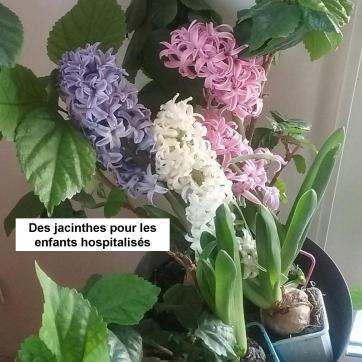 jacinthes avec texte